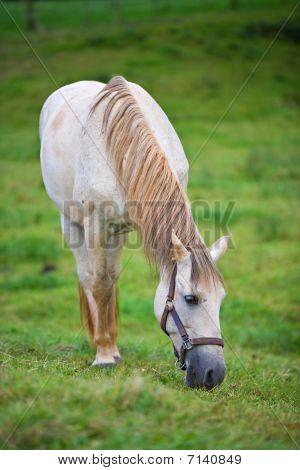 White Horse in Weide