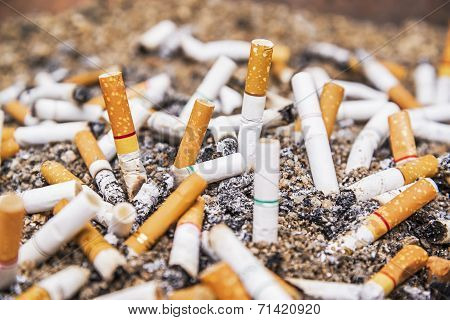 Cigarette Butts Discarded In Ashtray