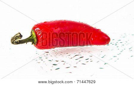 wet RED jalapeno hot pepper