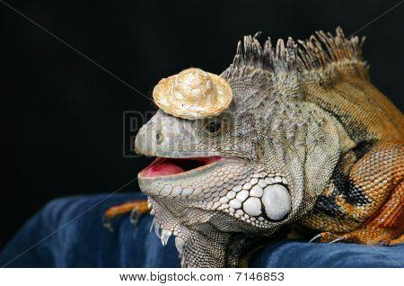 Iguana Hat