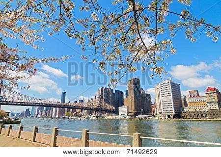 Cherry Blossom and river view on skyscrapers of Manhattan New York city.