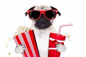 cinema movie tv watching pug dog isolated on white background with popcorn and soda wearing 3d glasses poster