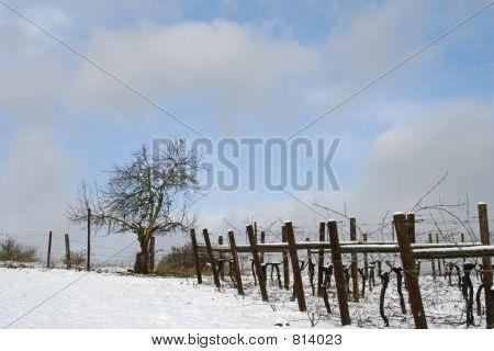 wintervineyard3