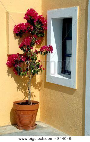 greece island flower pot