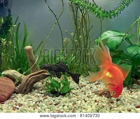 Aquarium Natives