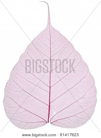 Old And Dry Pink Pho Leaf Detail