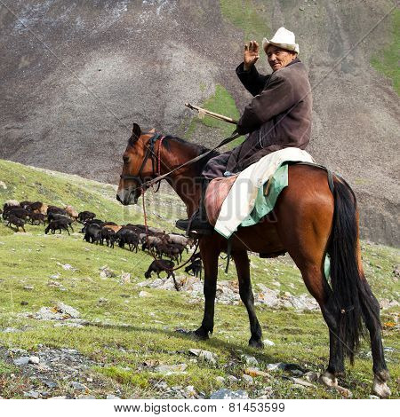 Stockrider With Flock In Alay Mountains On Pastureland