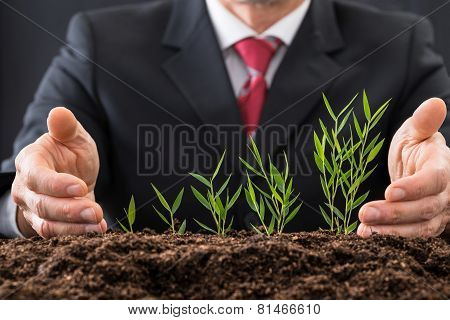 Businessman Protecting Plants