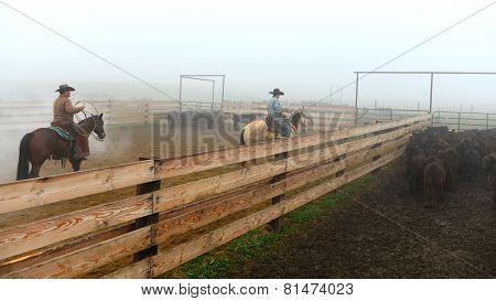 Branding Calves in the Fog