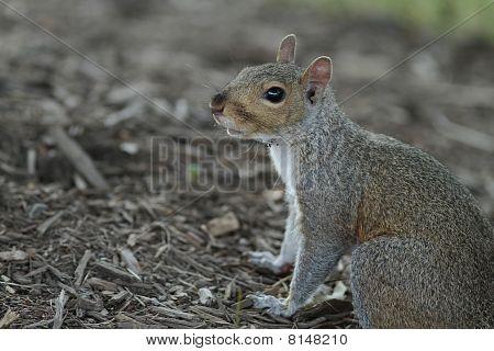 Squirrel getting nuts