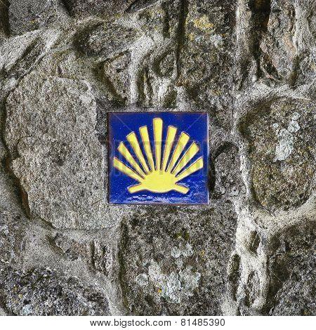 Pilgrim's Shell