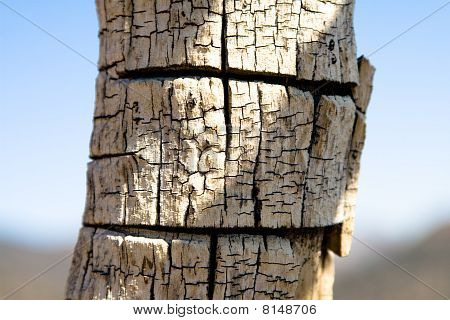 Detail Of Tree Trunk