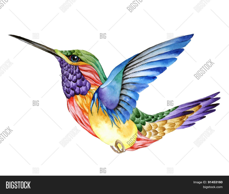 Hummingbird Tattoo Vector Photo Free Trial Bigstock