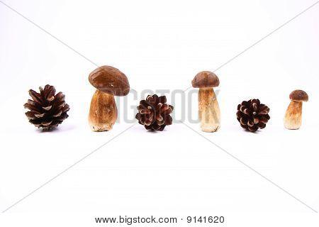 Mushrooms and cones