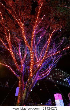 Tree Of Light At Vivid Sydney