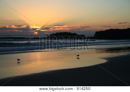 Sunrise At Beach With Seagull