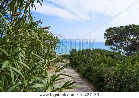Plants And Walk Path In Le Bombarde Beach