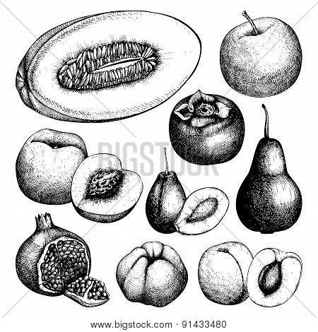 Vintage colorful fruit illustration for vegetarian food.