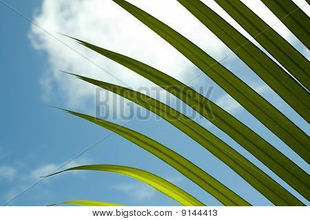 Palm Frond Leaf With Sky
