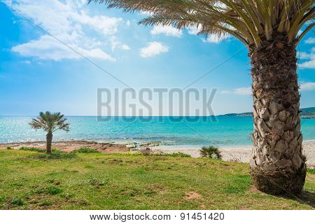 Palm Trees By Le Bombarde Shoreline
