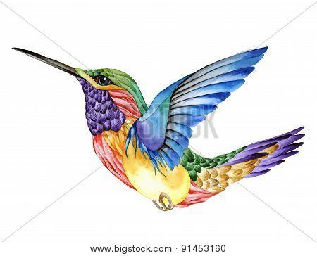 Hummingbird tattoo, watercolor painting