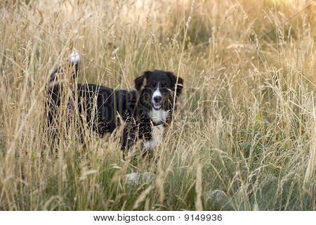 Dog - Playing hide and seek
