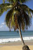 France Martinique Salines beach in Sainte Anne poster