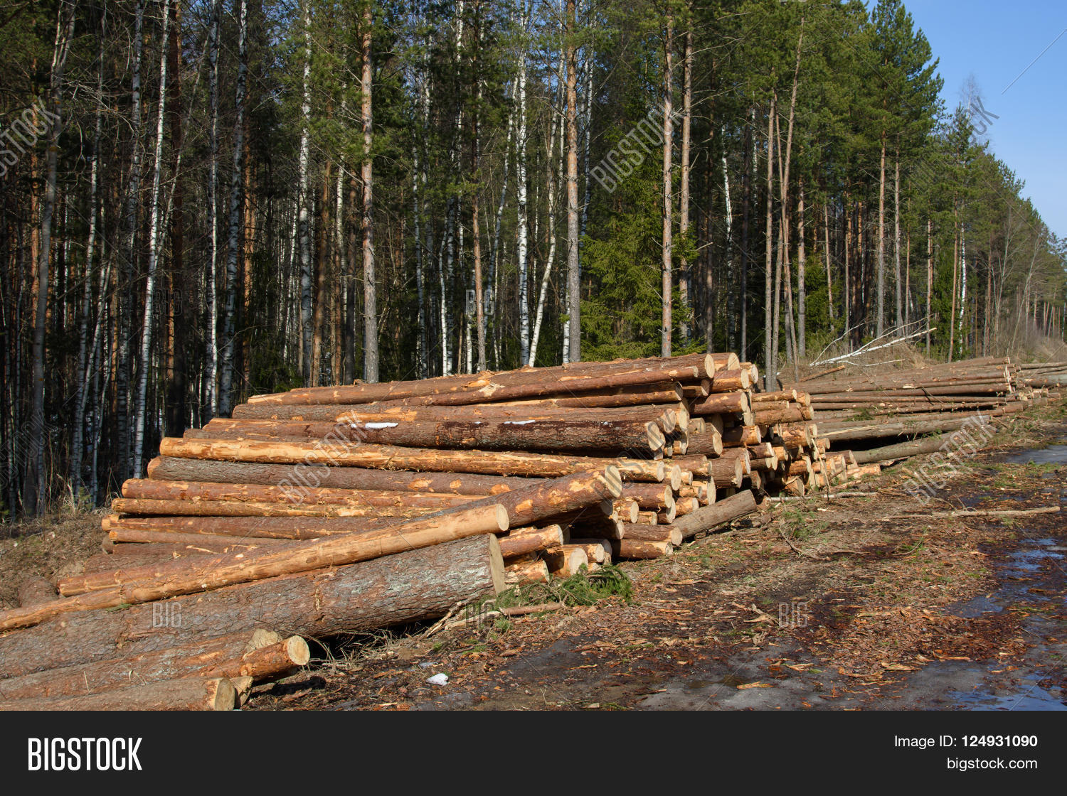 Cut Down The Trees Stacks Of Stacked In Spring Northern