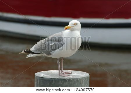 Seagull standing on a metal pole with a boat in the background