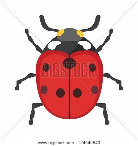 Ladybug vector insect isolated on white background. Flat red ladybug summer fly beetle. Spring ladybug insect. Ladybug cute cartoon insect vector. Insect beautiful design.