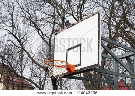 against a background of trees no leaves basketball hoop