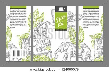 Tea picker woman tea leaves cup elephant. Vector engraved vintage isolated illustration for label green tea packaging box