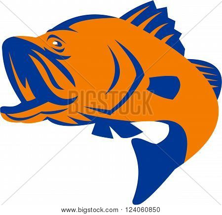 Illustration of a barramundi or Asian sea bass (Lates calcarifer) jumping on isolated background viewed from the side done in retro style.