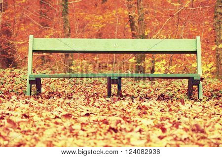 Sad abandoned green bench in park under dry maple and beech leaves. ** Note: Soft Focus at 100%, best at smaller sizes