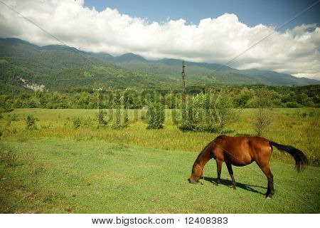 Picturesque summer landscape. Horse on pasture poster