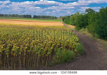 Ukrainian agricultural landscape at the end of summer season