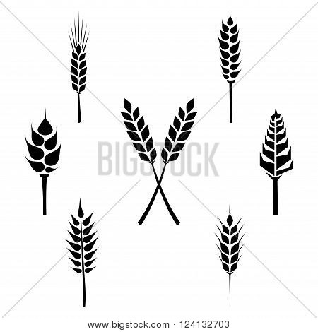 Types of grains, cereals icons - wheat, rye, barley, oats