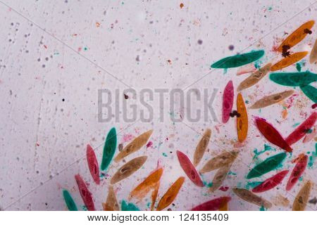 Paramecium Caudatum Under The Microscope - Abstract Shapes In Color Of Green, Red, Orange And Brown