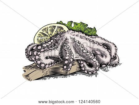 Drawing of raw octopus with fresh lemon and lettuce on the wooden board
