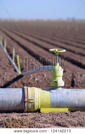 Irrigation pipe and sprinklers in a newly planted agricultural field.