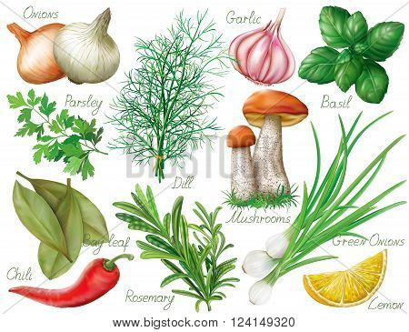 Set with green herbs and spices on white background. Vector illustration