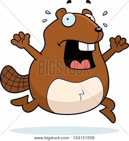 Beaver Panic