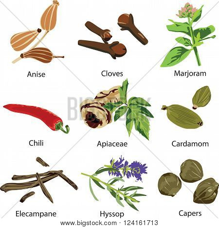 a set of different spices on white background