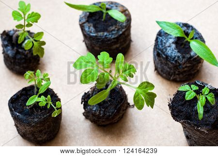 Preparing for the cultivation of plants in the garden. Green sprout. Spring came. Breeding ground