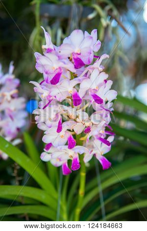 orchid in glass house of the garden