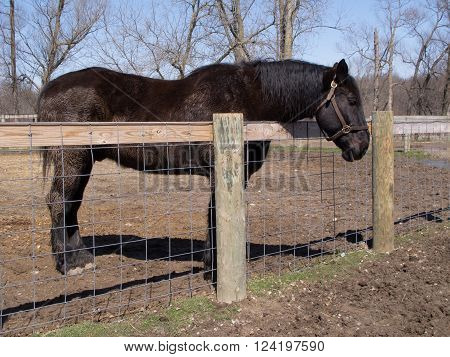 A horse stands by a new fence in the barnyard of a southeastern Michigan farm on a sunny blue sky day.