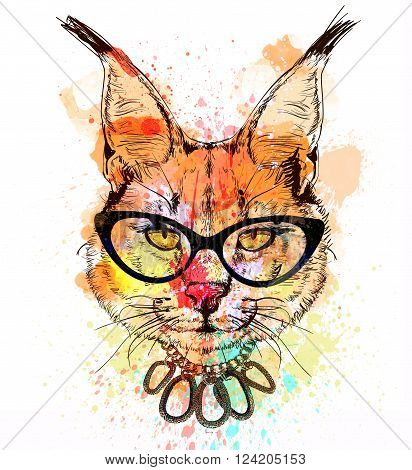 bobcat fashion colorful character portrait with glasses