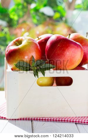 Fresh red apples in its box and green field background