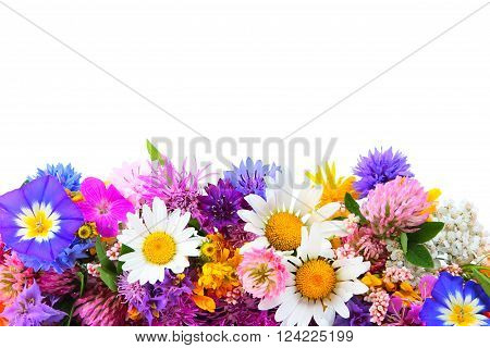 Bouquet of miscellaneous field flowers on white background