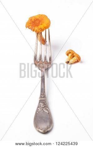 Fork With Chanterelles